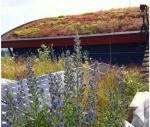 nouvelle vision des toitures végétalisées